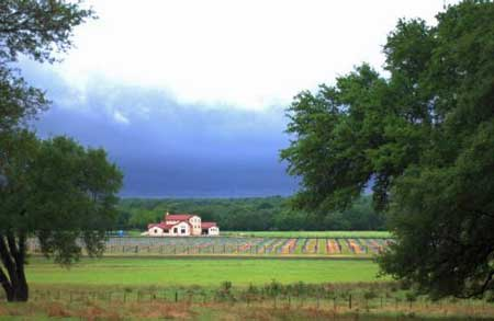 TexasHillCountryWinery