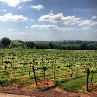 Kiepersol-Estate-Vineyard-2