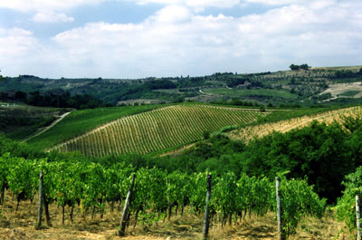 Badia-a-Coltibuono-Vineyard